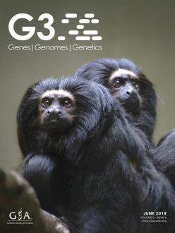 G3 cover